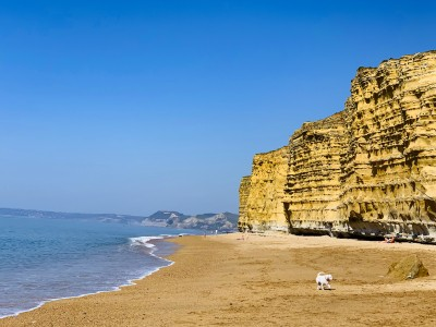 The sheer cliffs at Burton Bradstock with a small dog on the beach