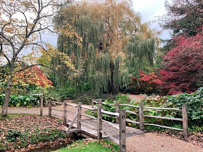The colourful trees and a small bridge at Savill Garden