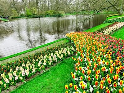 Flowers along the riverbank in Keukenhof - visit Keukenhof 2021 to see these