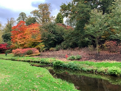 Colourful autumn trees and the small stream at Savill Garden