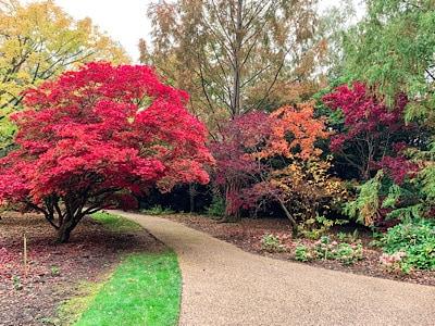 The colourful autumn trees at Savill Garden