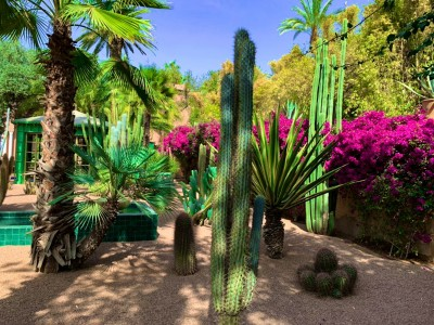 Cacti in the Majorelle Garden Marrakech - a visit here is a must on your 3 days in Marrakech