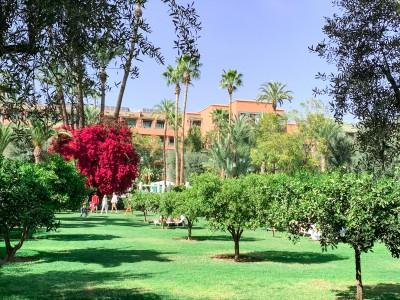 Part of the garden at Hotel La Mamounia Marrakech