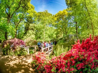 Part of Richmond Park - Isabella Plantation