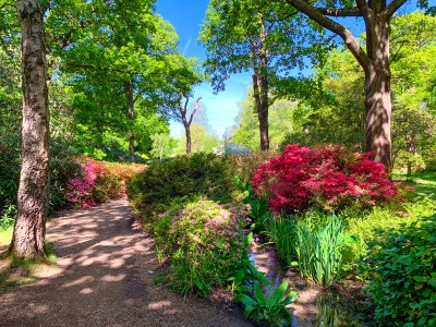 Part of Isabella Plantation in Richmond Park with trees and flowers and shrubs