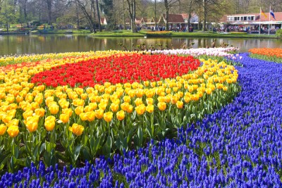 Some of the colourful flowerbeds at Keukenhof with the stream beside it
